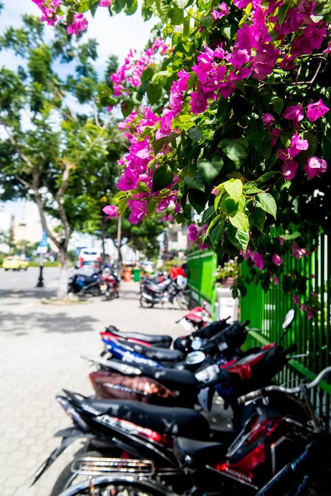 부겐빌레아(Bougainvillea)와 오토바이