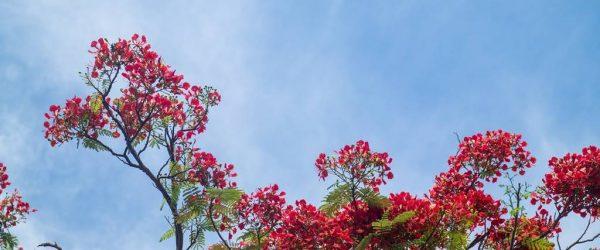베트남 다낭 여행기 #17 –  베트남 다낭과 호이안에서 만난 아름다운 꽃들 1