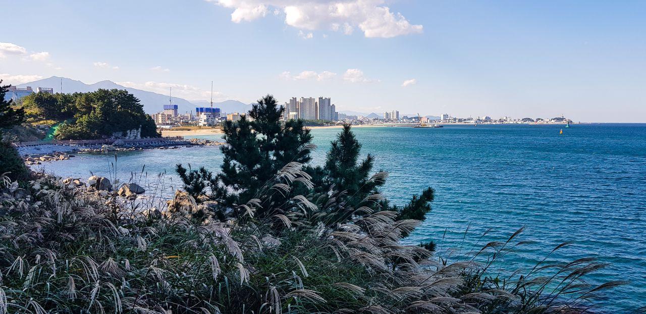 속초 외옹치 둘레길(바다향기로) 데크에서 담아본 갈대와 외웅치해변 풍경