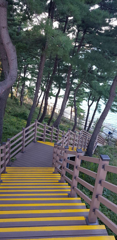 속초 외옹치 롯데리조트에서 외옹치 둘레길(바다향기로)로 내려가는 계단