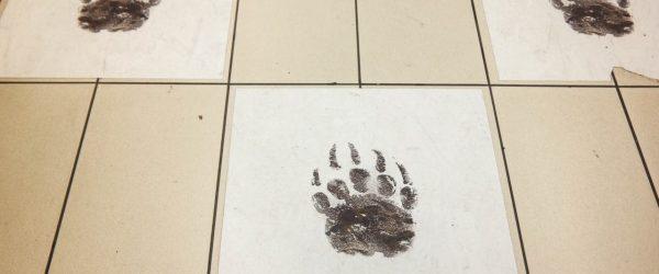 넷플릭스가 신작 모글리를 광고하는 방법 - 이탈리아 밀라노 지하철 광고 사례 2