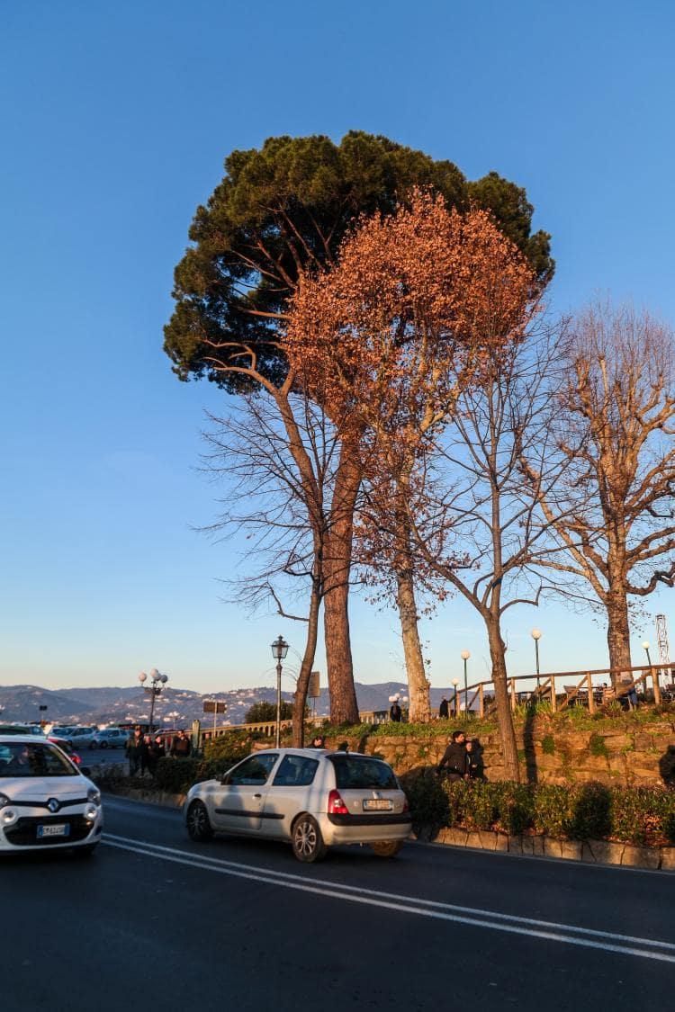 이탈리아 여행, 피렌체 야경이 아름다운 미켈란첼로 광장, 미켈란첼로광장에 도착하자마자 만나는 소나무, Image - Choi dongsoon