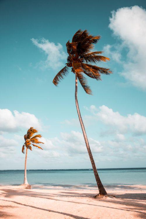 도미니카 해변 풍경, Photo by benjamin-voros