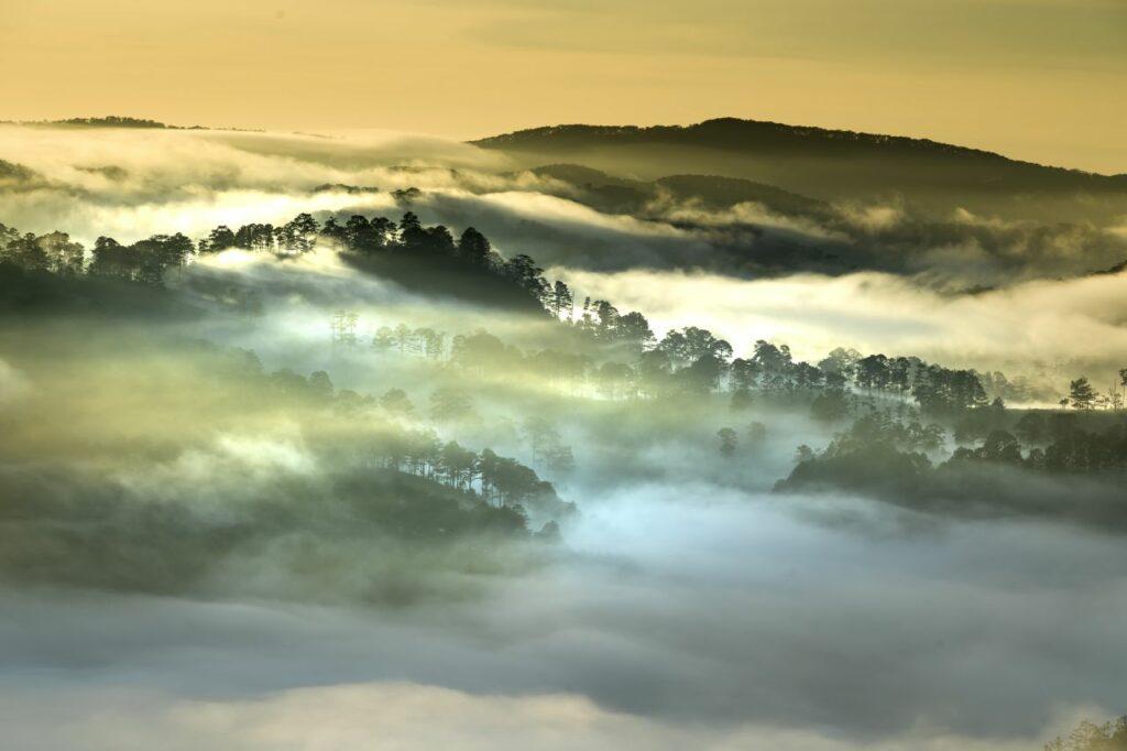 베트남 달랏(Dalat) 안개 풍경,  Image Quangpraha