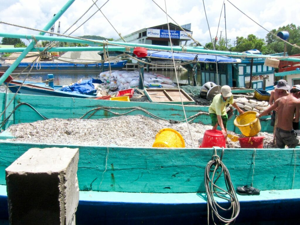 베트남 푸꾸옥, 베트남의 전통소소, 느억맘(Nuoc Mam)을 만드는 작은 생선, photo by jennifer yin
