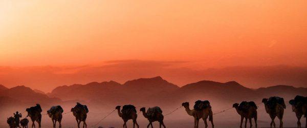 아프리카 에티오피아(Ethiopia) 낙타 행렬, man walking beside parade of camels background of mountain,featured, Photo by trevor-cole