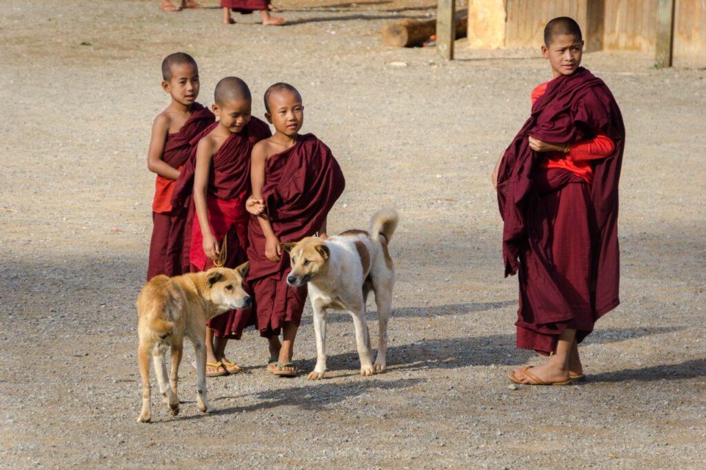 미얀마 인레 호수(Inle Lake) 아이들, Waking up at 6AM, these monks get a little bit of playtime before they have to do their morning chores at their monastry, photo by danny-postma