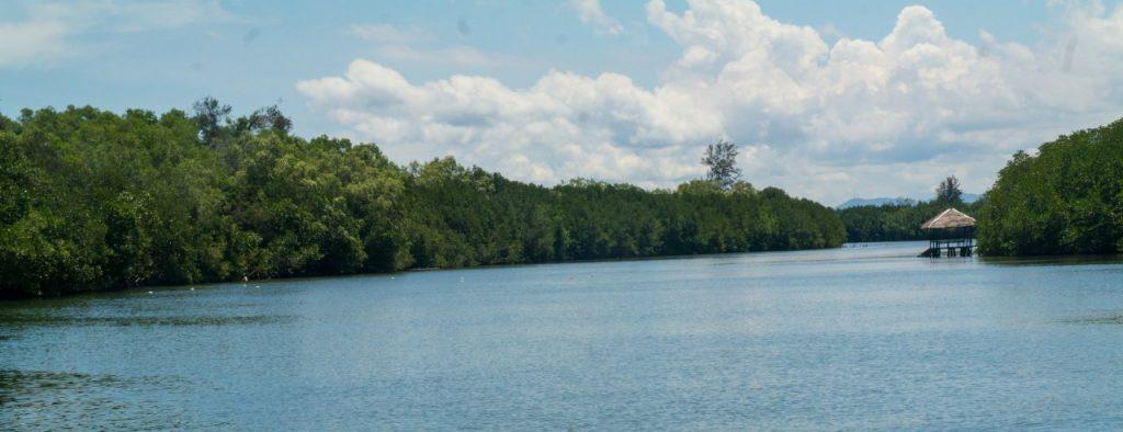 코타키나발루 맹그로브 투어  맹그로브강 풍경과 구