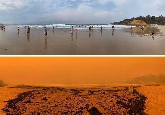2019~2020 호주 산불 전후 사진, 타트라 해변(Tathra Beach), 시커멓게 그을린 나무와 재가 해안으로 밀려왔다, Image from Boredpanda, Jaxon24