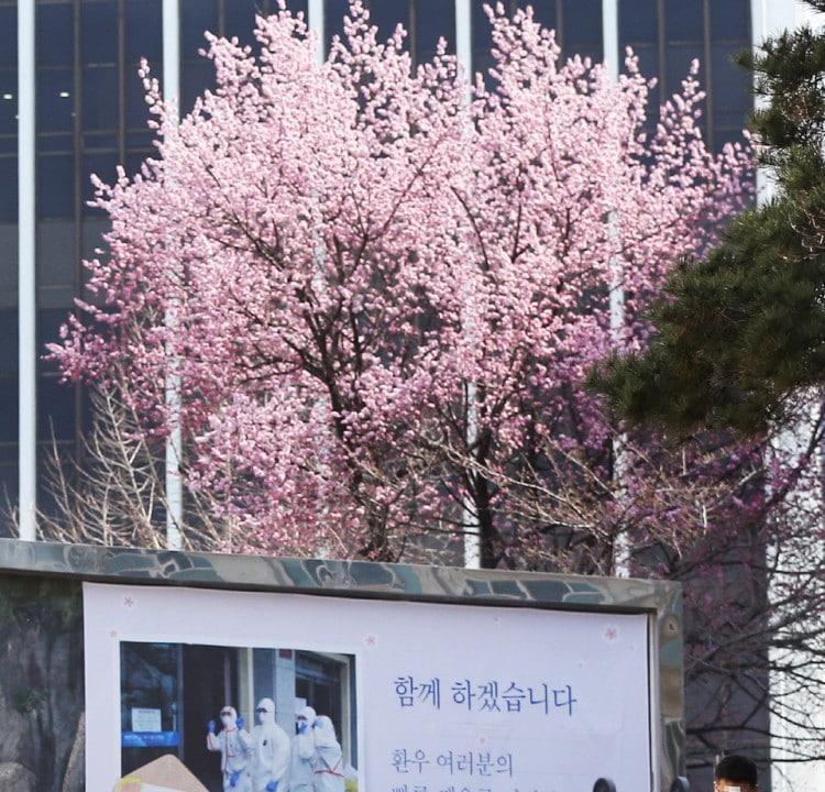 코로나 간호사, 대구 동산병원의 봄, 이미지 출처, 경북일보