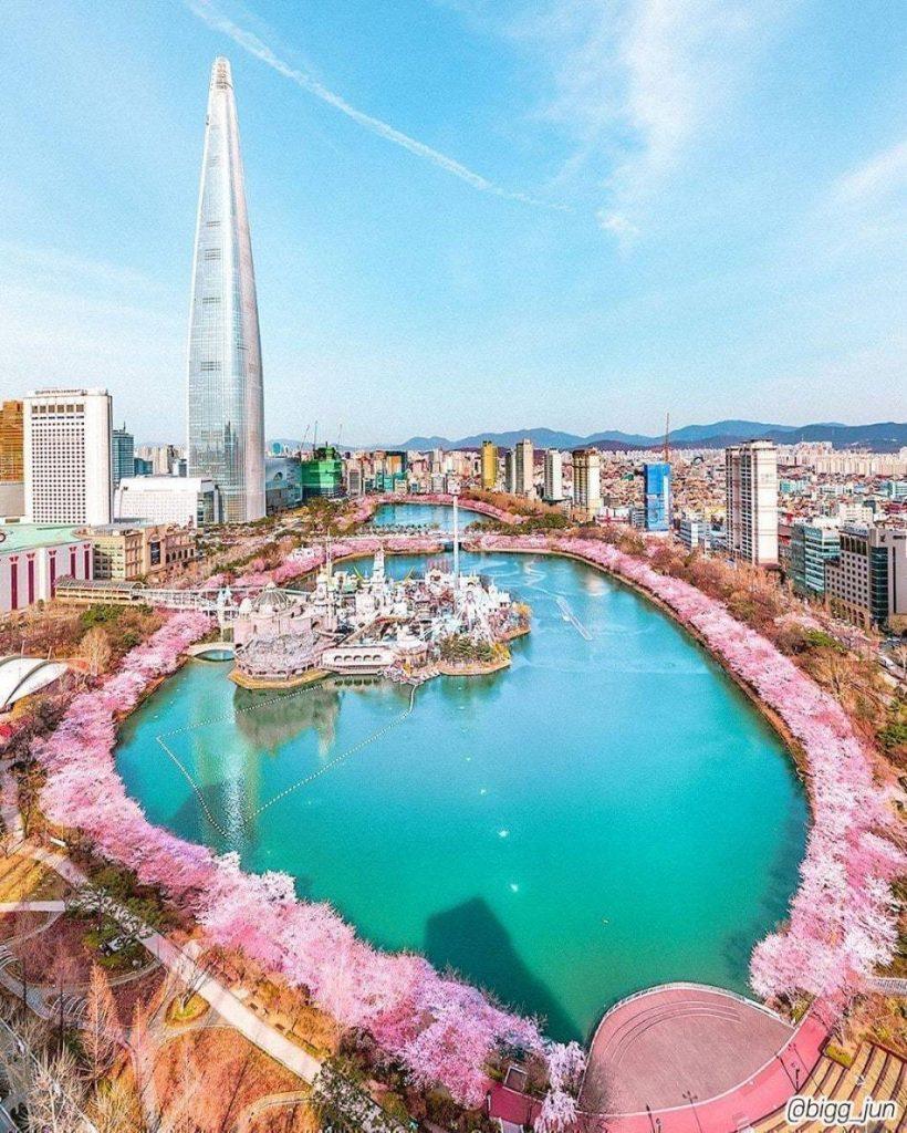 코로나19 풍경, 석촌호수가를 따라 만개한 벚꽃 풍경, Image from Lotte World