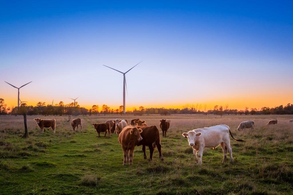 소들을 방목하는 평화로운 목장 모습, Photo by Evi T